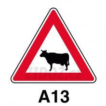 A13 - Zvířata